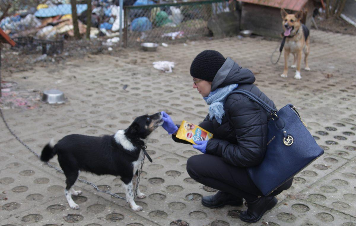 15 grudnia 2017 – Wrażliwi na los zwierząt